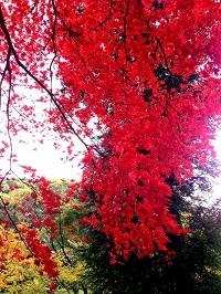 写真 2012-11-19 12 24 11.jpg
