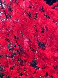 写真 2012-11-19 12 24 44.jpg